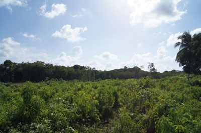 Old Northern Highway, Belize - BLZ (photo 2)