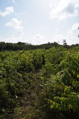 Old Northern Highway, Belize - BLZ (photo 3)