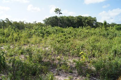 Old Northern Highway, Belize - BLZ (photo 5)