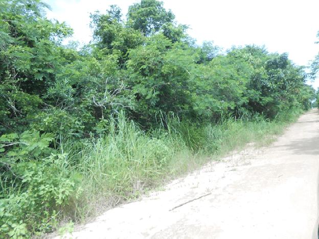 1.2 Miles Northwest Of San Joaquin Village, San Joaqui Rural Area - BLZ (photo 2)