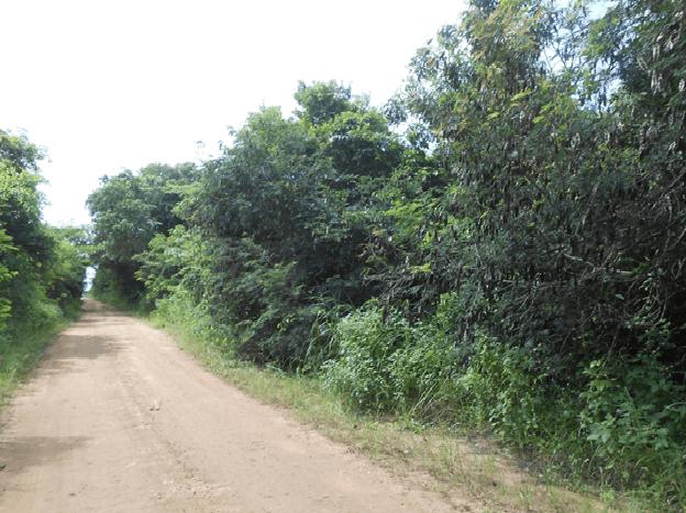 1.2 Miles Northwest Of San Joaquin Village, San Joaqui Rural Area - BLZ (photo 5)