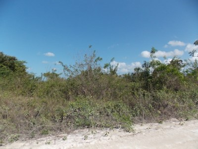 Mayan Sands, Corozal Town - BLZ (photo 4)