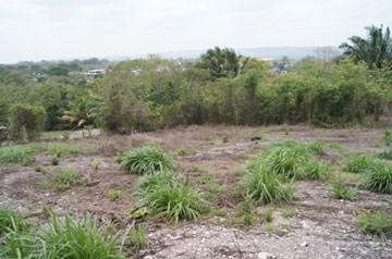 Vista Maya, San Ignacio Town - BLZ (photo 1)