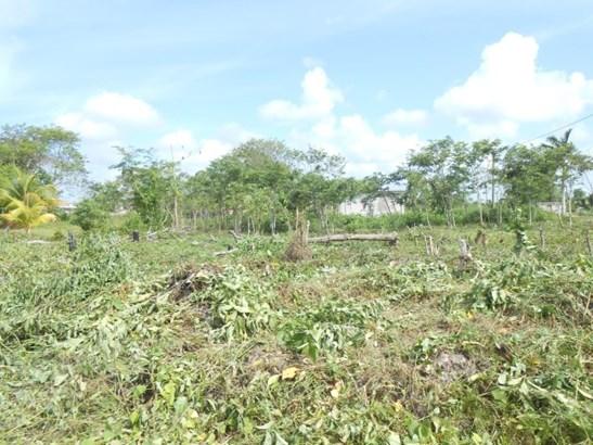 475 Ft West Of Corozal Bay Next To Corozal Town, Finca Solana Area - BLZ (photo 5)