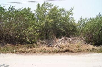 San Pedro Town, Ambergris Caye - BLZ (photo 1)