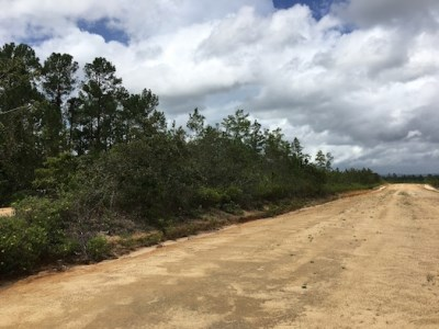 One Mile West Blancaneaux Airstrip, Mountain Pine Ridge - BLZ (photo 3)