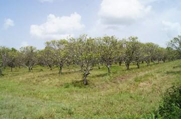 More Tomorrow Road, Cotton Tree Village - BLZ (photo 3)