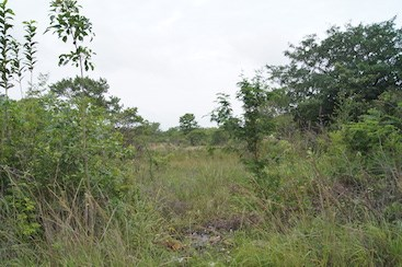 Old Northern Road, Ladyville - BLZ (photo 5)