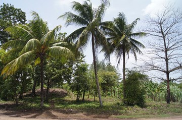 Butte Rows Road, Belmopan - BLZ (photo 4)