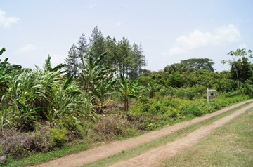 Butte Rows Road, Belmopan - BLZ (photo 5)