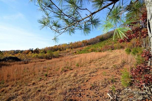 Undeveloped - Bassett, VA (photo 4)
