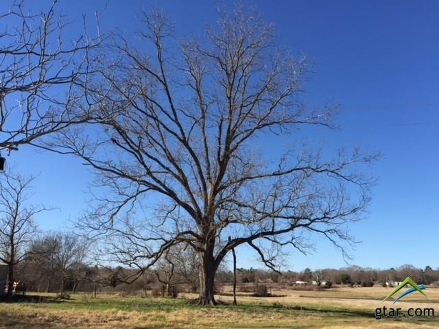 Rural Acreage - Whitehouse, TX (photo 3)
