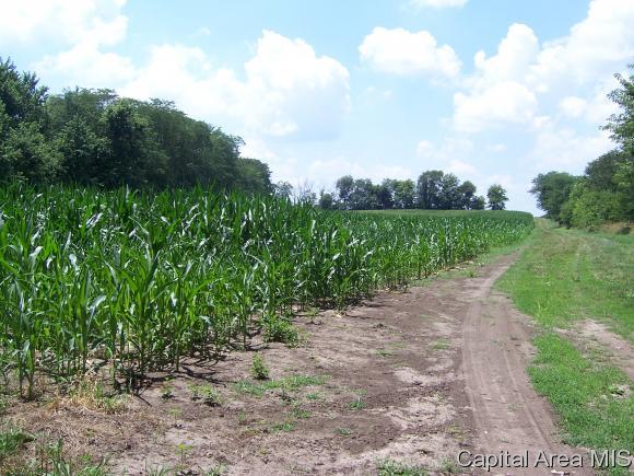 Crops - Loami, IL (photo 1)