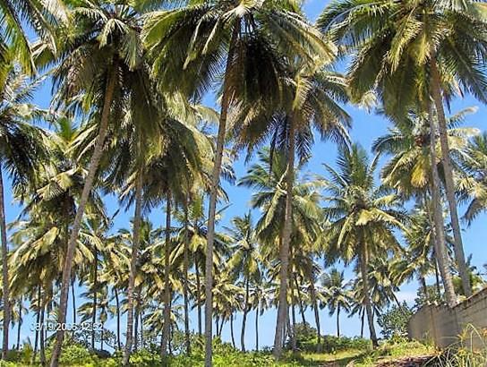 Las-canas - DOM (photo 2)
