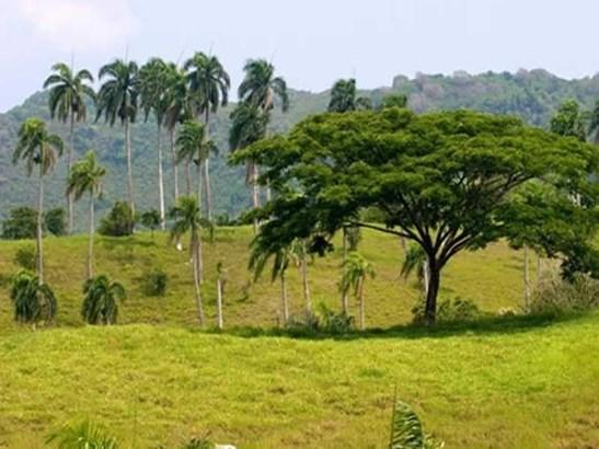 Jamao - DOM (photo 1)