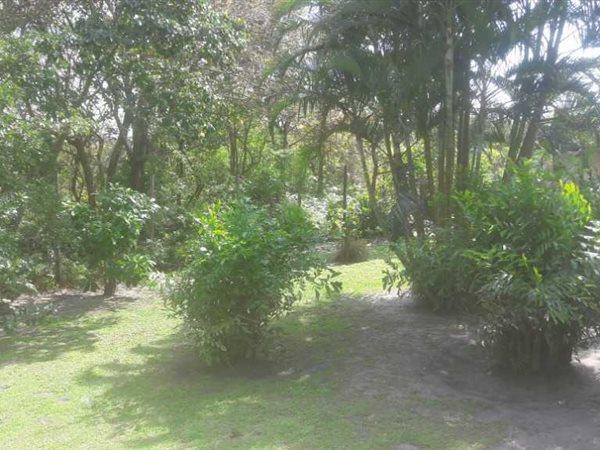 Birdswood, Richards Bay - ZAF (photo 3)