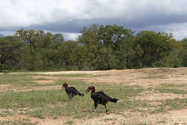 Moditlo Nature Reserve, Hoedspruit - ZAF (photo 1)