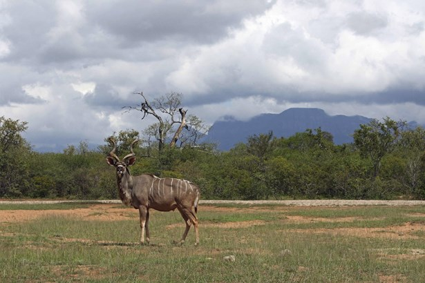 Moditlo Nature Reserve, Hoedspruit - ZAF (photo 3)