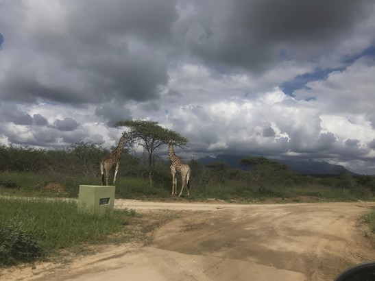 Moditlo Nature Reserve, Hoedspruit - ZAF (photo 4)