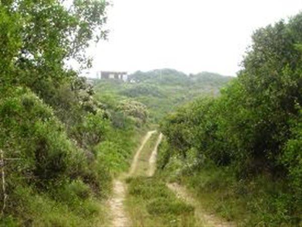Wilderness - ZAF (photo 3)