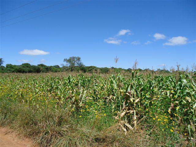 Chilanga, Lusaka - ZAF (photo 1)
