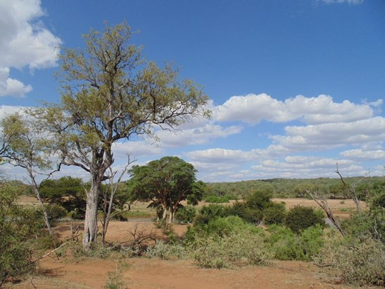 Grietjie Private Nature Reserve, Hoedspruit - ZAF (photo 1)