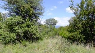 Blyde Wildlife Estate, Hoedspruit - ZAF (photo 2)