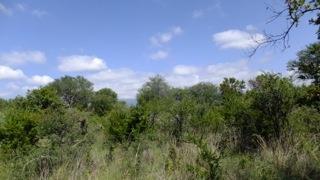 Blyde Wildlife Estate, Hoedspruit - ZAF (photo 3)
