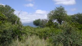Blyde Wildlife Estate, Hoedspruit - ZAF (photo 4)
