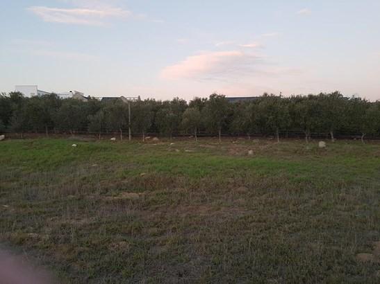 Croydon Olive Estate, Somerset West - ZAF (photo 2)