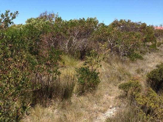4063 Gladiolus, Bettys Bay - ZAF (photo 1)