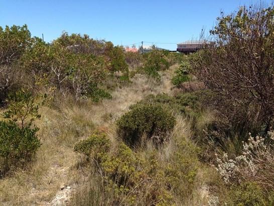 4063 Gladiolus, Bettys Bay - ZAF (photo 5)