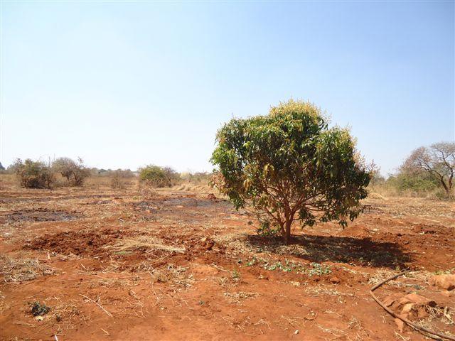 Chongwe, Lusaka - ZAF (photo 2)