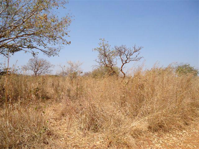 Chongwe, Lusaka - ZAF (photo 4)
