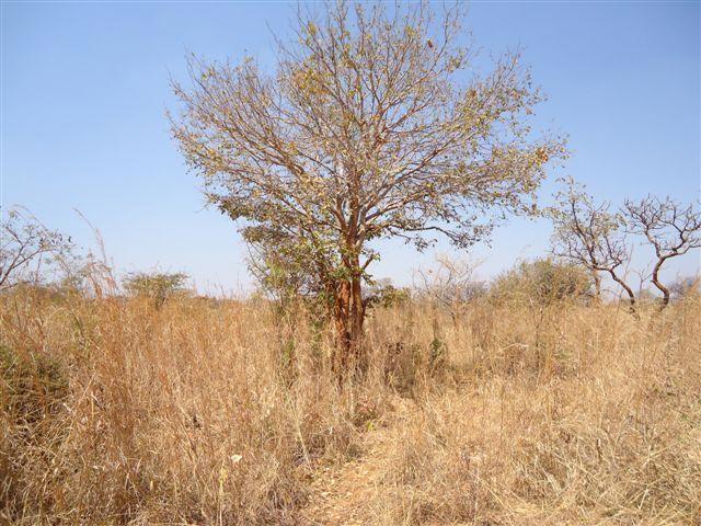 Chongwe, Lusaka - ZAF (photo 5)