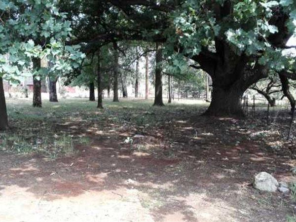 Pollak Park, Springs - ZAF (photo 2)