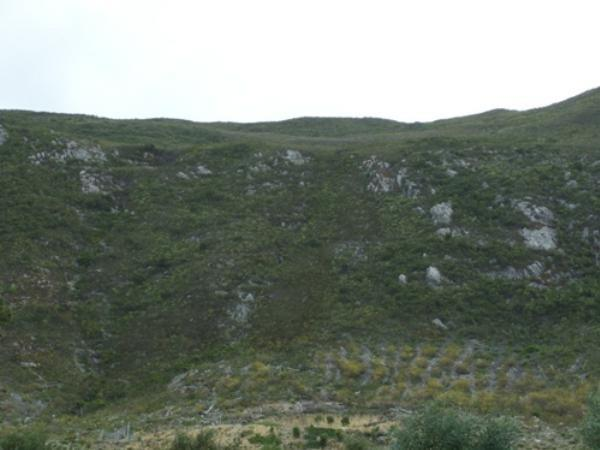 Chanteclair, Hermanus - ZAF (photo 2)