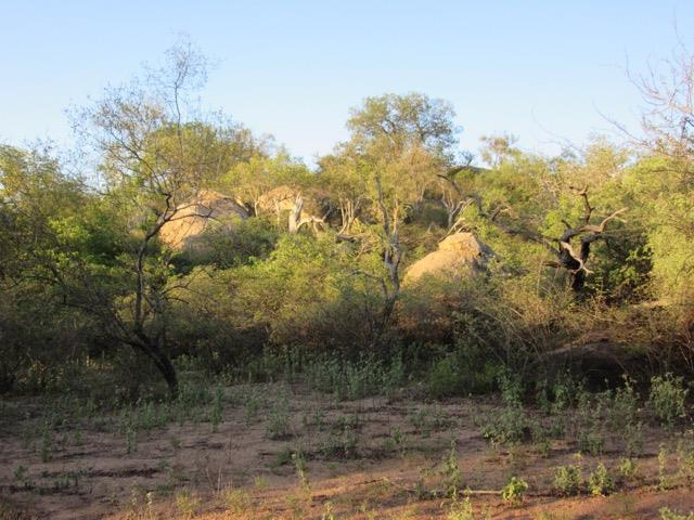 Leopard Rock Nature Reserve, Hoedspruit - ZAF (photo 2)