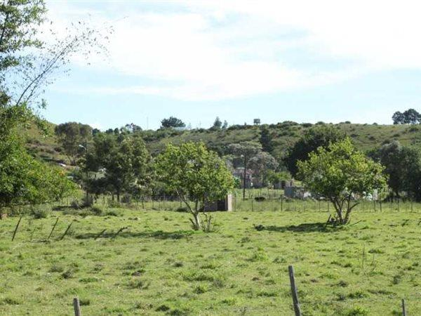 Suurbraak, Swellendam - ZAF (photo 5)