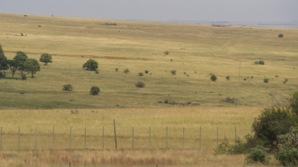 58  Rustenberg, Wildtuin Park, Krugersdorp - ZAF (photo 5)