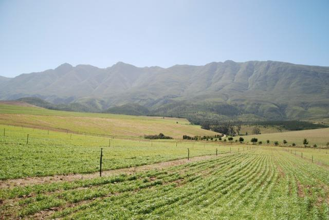 Swellendam - ZAF (photo 2)