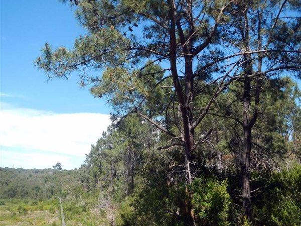 Wilderness - ZAF (photo 5)