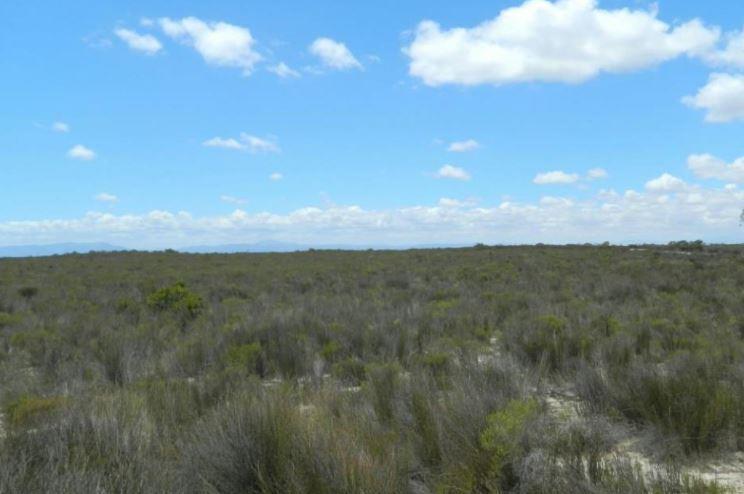 Hartebeesfontein, Hopefield - ZAF (photo 4)