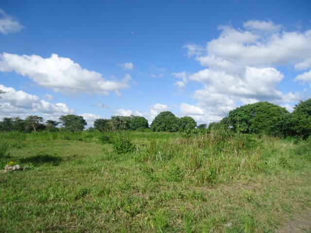 Chilanga, Lusaka - ZAF (photo 2)
