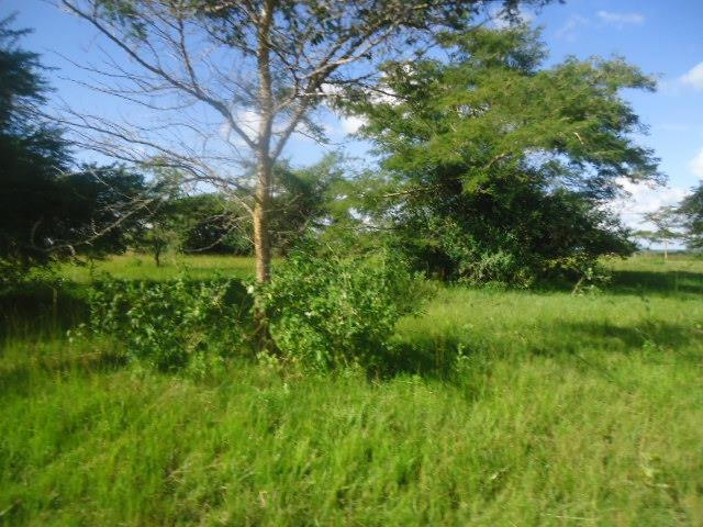 Chilanga, Lusaka - ZAF (photo 3)