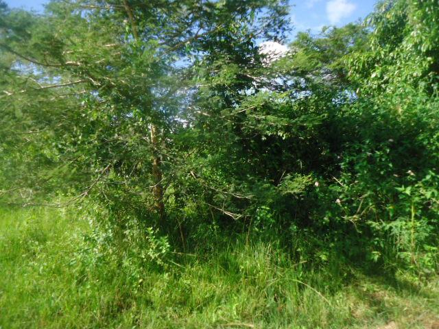 Chilanga, Lusaka - ZAF (photo 4)