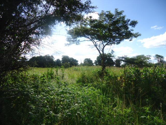 Chilanga, Lusaka - ZAF (photo 5)