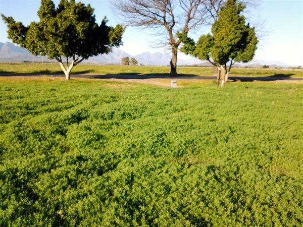 52h Botha, Rawsonville, Worcester - ZAF (photo 2)