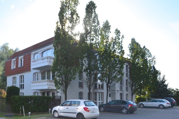 Potsdam / Eiche - DEU (photo 3)