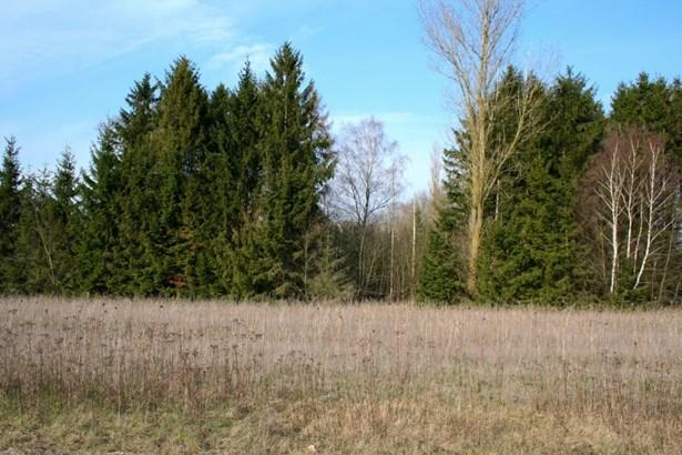 Schneverdingen / Wintermoor - DEU (photo 4)